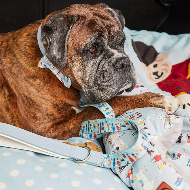 Cath Kidston Dog Model Competition