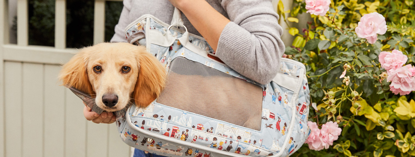 Is Your Pet Cath Kidstons Next Dog Model | Cath Kidston